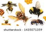 bee  bumblebee  wasp  hornet.... | Shutterstock .eps vector #1435071359