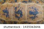 Stock photo tortoise shell pattern elongated tortoise indotestudo elongata 1435363646