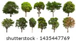 isolated tree set set on a... | Shutterstock . vector #1435447769