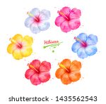 watercolor hand drawn... | Shutterstock . vector #1435562543