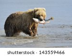 Grizzly Bear With Salmon In...