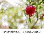 One Little Red Garnet Hanging...