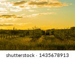 ontario farmer in tractor at... | Shutterstock . vector #1435678913