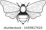 beautiful hand drawn honey bee... | Shutterstock .eps vector #1435817423
