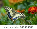 Swallowtail Butterfly On The...
