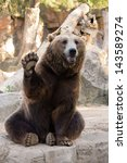 Friendly Brown Bear Sitting An...