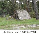 This primitive settler