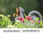 Closeup Of A Yellow Swallowtail ...