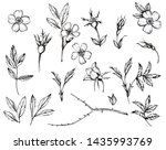 hand drawn floral bunches with... | Shutterstock . vector #1435993769