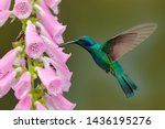 Hummingbird With Pink Bloom In...