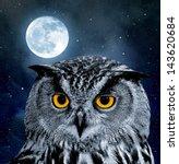 Eagle Owl  Bubo Bubo