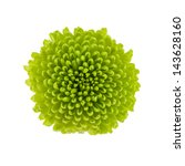 Stock photo small green flower isolated on white background 143628160