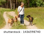 Stock photo dog sitter walks with many dogs on a leash dog walker with different dog breeds in the beautiful 1436598740