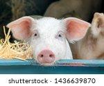Portrait Of Cute Curious White...