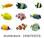 Colorful Fish Isolated...