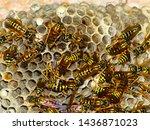 Wasp Nest With Wasps Sitting O...