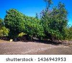 Natural Environment Shade Tree...