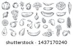 sketched vegetables and fruits. ... | Shutterstock .eps vector #1437170240