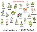 best sedative and hypnotic... | Shutterstock .eps vector #1437256046