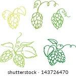 various hops vector illustration | Shutterstock .eps vector #143726470