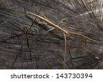 A Detail Of A Stick Bug.