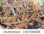 bunch of bunch of old rusty... | Shutterstock . vector #1437356006