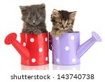Stock photo small kittens sitting in watering can isolated on white 143740738