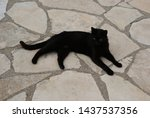 black cat laying on the stone... | Shutterstock . vector #1437537356