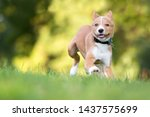 a playful red and white mixed...   Shutterstock . vector #1437575699