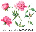 set of vintage watercolor pink... | Shutterstock . vector #1437603869
