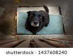 Small photo of dog standing in blue carpet. wooden gate. looking up. pity face. rescued mutt.