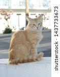 cute orange cat with green eyes ... | Shutterstock . vector #1437733673
