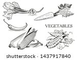 fresh vegetables beets carrots... | Shutterstock .eps vector #1437917840