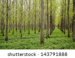 drainage forest with trees...