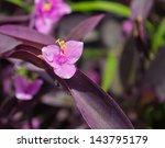 Purple Flower Setcreasea...
