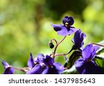 Violet Flower With Green Leaves ...