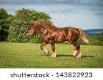 Suffolk Punch Stallion Trotting ...