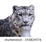 Isolated Female Of Snow Leopar...