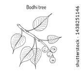 sacred fig  or bodhi tree ... | Shutterstock .eps vector #1438251146