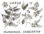 hand drawn set of coffee tree...   Shutterstock .eps vector #1438259759