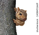 Squirrel Behind A Tree Holding...