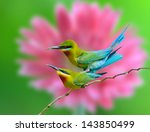 blue tailed bee eater mating on ... | Shutterstock . vector #143850499