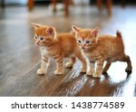 Stock photo the little red kitten plays on the floor looking directly at us horizontal photo beige and orange 1438774589