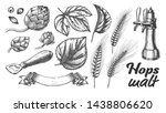 hop leaves barley wheat rye ear ... | Shutterstock . vector #1438806620