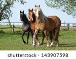Stock photo herd horses running on pasture 143907598
