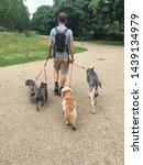 Stock photo dog walker in a park in london 1439134979