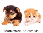 Stock photo little kitten and puppy isolated in white 143924734