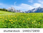 Summer alps landscape with flower meadows and mountain range in background. Photo taked near Walderalm, Austria, Gnadenwald, Tyrol Region