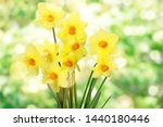 Daffodils Isolated On White...