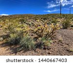 A Cactus And Desert Plants...